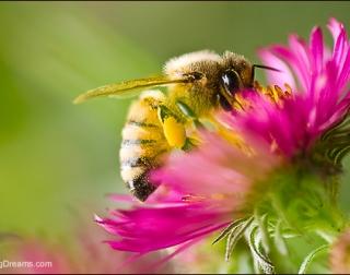 Warwick Masterclass: Honey Bee Husbandry