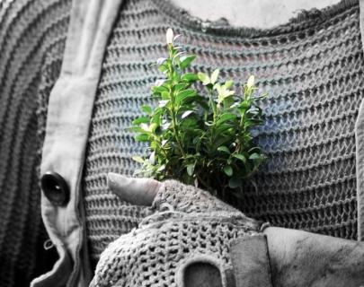 Tree - Highly Sprung