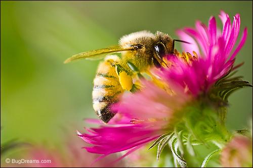 warwick masterclass honey bee husbandry