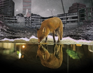 A fox drinking water from a lake in a dystopian background