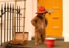 Paddington Bear wearing signature red hat on a doorstep looking at a red bucket