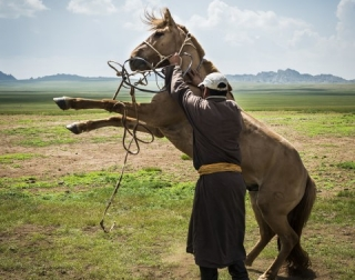A man trying to control a horse standing on his back legs with the Mongolian steppe in the background