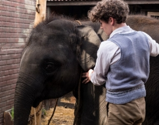 An image of a boy standing looking at a baby elephant