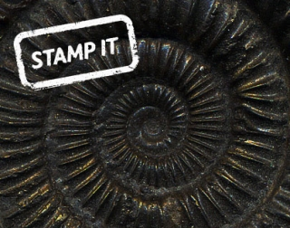 STAMP-IT-EVENT-fossils.jpg